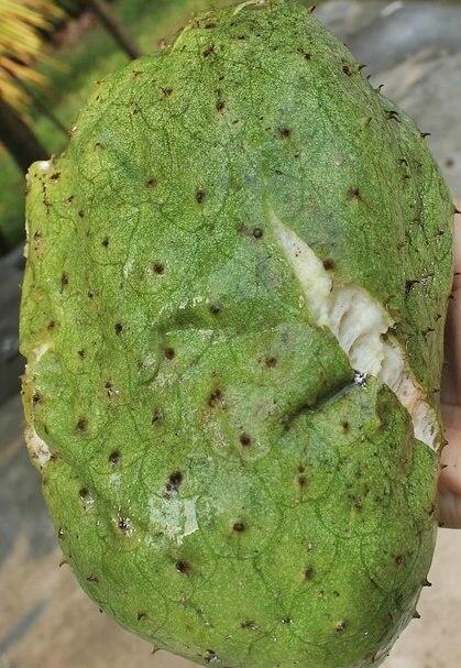 una guanábana