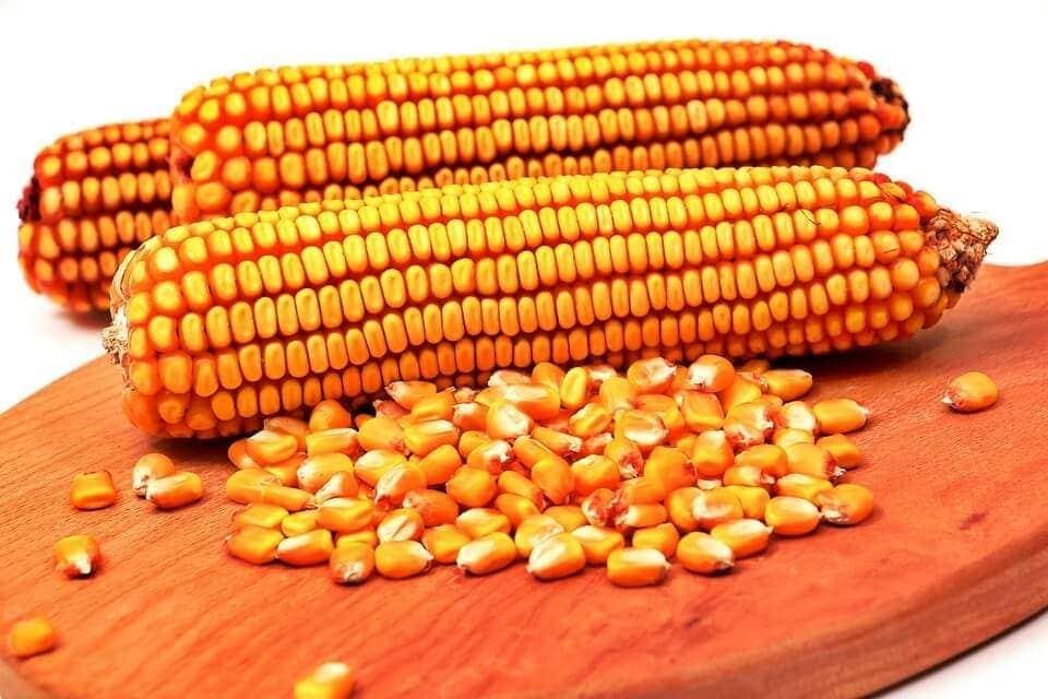 mazorcas de maíz, granos de maíz, cereales